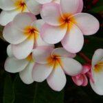 Ceren Profil Fotoğrafı